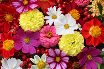 Deurstickers Dahlia flower banner. garden flowers, top view.