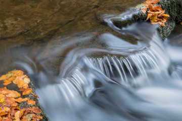 Canvas Prints Forest river water flowing with golden leaves around it