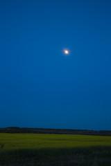 Moon is over a rape field in the night.