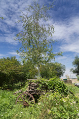 Beautiful summer landscape with a birch and cart.