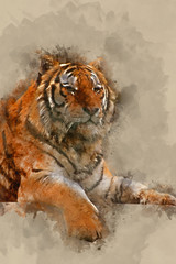 Digital watercolor painting of Stunning close up image of tiger relaxing on warm day