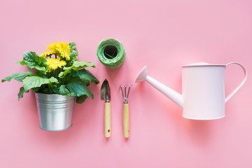 Gardening background with watering can and gerbera flowers on pink. Knolling. View from above.