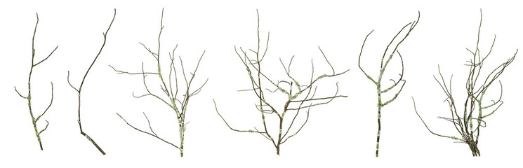 Dried mossy tree branches collection isolated on the white background. Fototapete