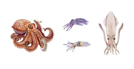 Octopus, squid, cuttlefish and calamari watercolor illustration set. Hand drawn sea life animals. Fresh seafood marine objects. Underwater aquatic octopus, squid, cuttlefish collection on white.