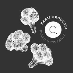 Hand drawn sketch style broccoli. Organic fresh food vector illustration on chalk board. Retro vegetable cauliflower illustration. Engraved style botanical picture.