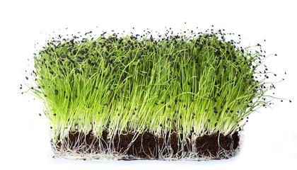 Fototapeta chives sprouts on white background obraz