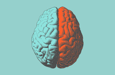 Color drawing brain illustration in vintage style Wall mural