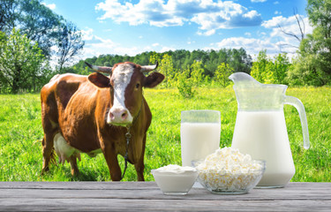 Dairy products on wooden table on background of brown cow and pasture