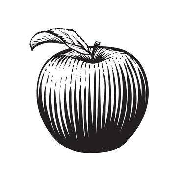 Engraved vector illustration of an apple with leaf. Vintage. Hand realistic drawing.