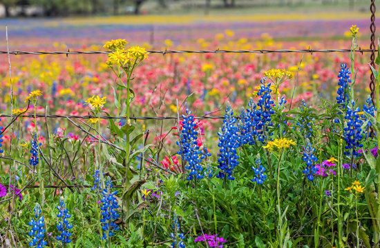 Texas wildflowers bursting in rainbow colors