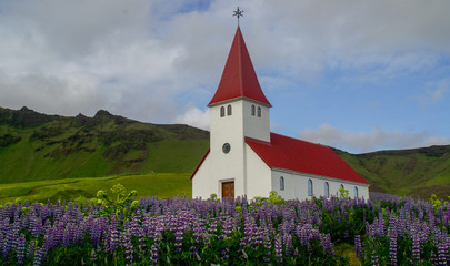 Church surrounded by blooming pink lupine flowers in summer, Vík village, Iceland Wall mural