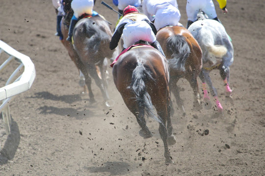Horse Racing Action At The Track