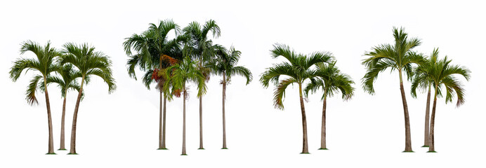 Foto op Canvas Palm boom Palm tree isolated collection on white background