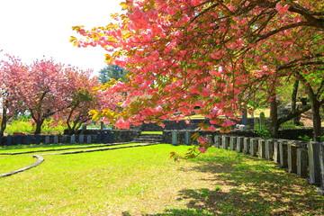 Stores à enrouleur Kaki 겹벚꽃이 활짝핀 제주에 있는 '감사 공묘역'의 봄 풍경이다.