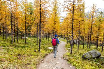 Wall Mural - Hike in autumn Canada