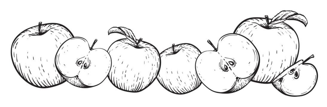 Apple fruit vector set. Frame of black white apples. Engraved vector illustration. Vintage hand realistic drawing.
