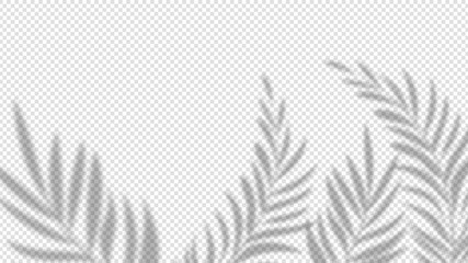 Shadow palm leaves. Overlay plant effect on transparent background. Summer minimalistic blurred nature vector banner. Palm shadow overlap, covers branch leaf illustration
