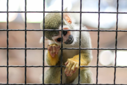 small yellow leg monkey on tree in zoo cage