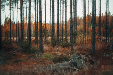 Zelfklevend Fotobehang Diepbruine autumn forest