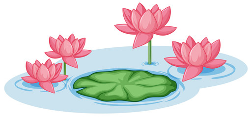 Pink lotus flowers with one green leaf in the pond
