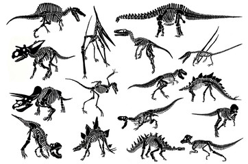 Graphical set of dinosaur skeletons isolated on white background,jpg illustration