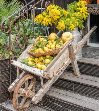 Une brouette d'agrumes et de mimosas