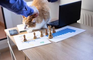 hombre trabajando en oficina con su gato, haciendo fotos