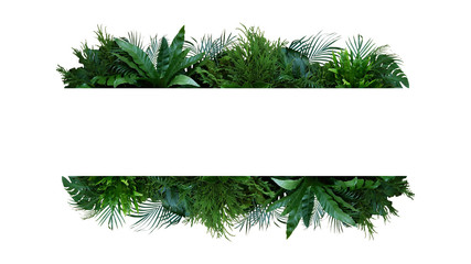 Wall Mural - Green leaves nature frame layout of tropical plants bush (Monstera, palm, fern, rubber plant, pine, birds nest fern) foliage floral arrangement on white background with clipping path.