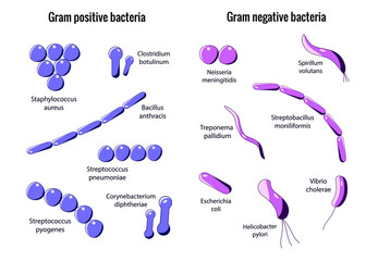 Microbiology set. Arrangements of bacterial microorganism. Gram positive and Gram negative bacteria. Isolated on white