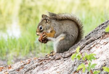 Squirrel in Grand Teton National PArk