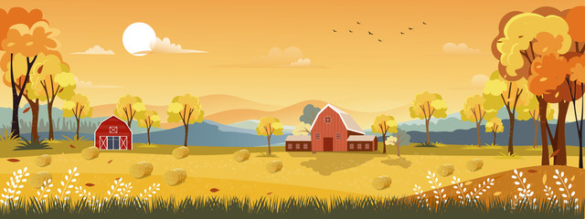 Printed kitchen splashbacks Beige Vector Autumn panorama landscape farm field with orange sky, Beautiful sunset in Autumn countryside panorama view with yellow foliage,Fall season with copy space for banner background