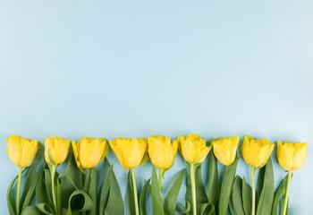 Yellow tulips flowers .Symbol of spring.