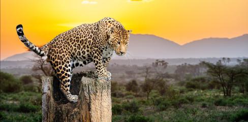 Wall Mural - Leopard sitting on a tree
