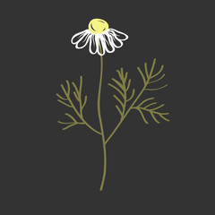 Wall Mural - Doodle vector of Chamomile Flower. Hand drawn Symbol of Love, White Daisy, Signs of Spring and Summer