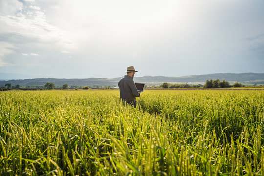 Farmer in field of grass, inspecting crops with laptop. Bridger, Montana, USA