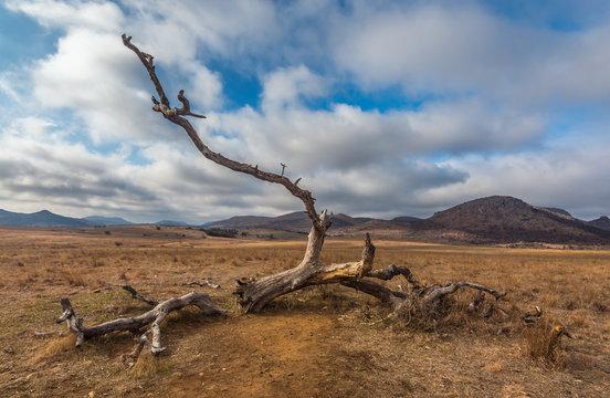 Wichita Mountains, dead tree,