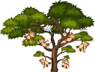 Big tree and monkeys on white background