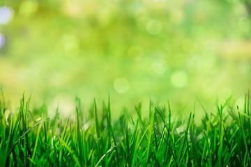 Wall Mural - grass with natural green bokeh background, spring garden
