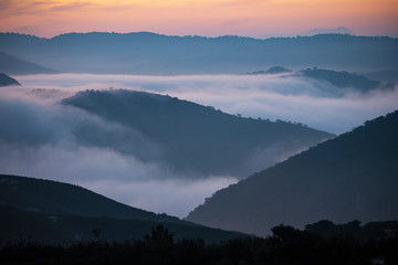 Forest landscape and hills in morning light