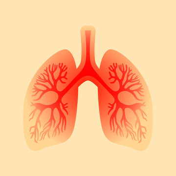 Lungs inflammation vector icon