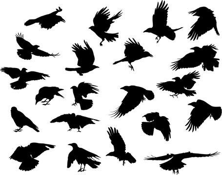 group of twenty one crow black silhouettes on white
