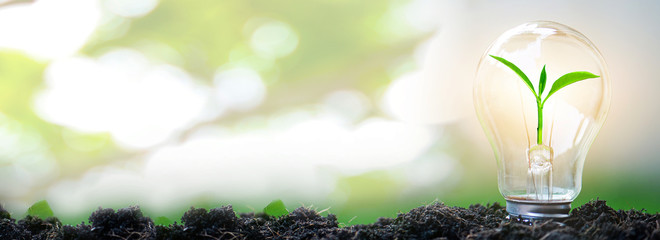 Sapling glowing in light bulb in soil with natural bokeh background, idea or energy and safe...