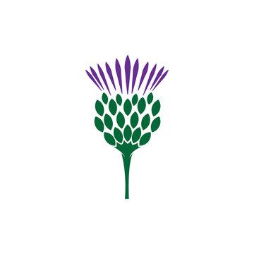 Scottish Thistle flower logo illustration
