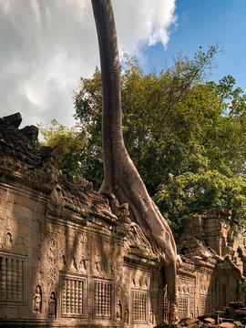Arbre fromager sur une galerie de Preah Khan