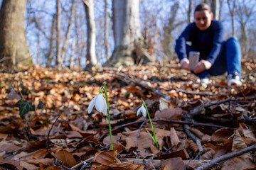 Woman taking pictures of fresh white snowdrop flowers (Galanthus nivalis) in the forest by the lake in beautiful sunny day. First messengers of spring. Front view. Close up. Selective focus.