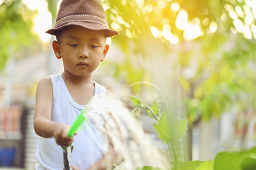 An Asian boy is looking after vegetable plots. He is watering the plants.