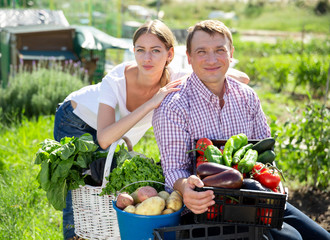 Fototapete - Young family couple with harvest of vegetables in garden outdoor