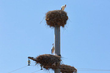 Two storks stand on the nests against the blue sky