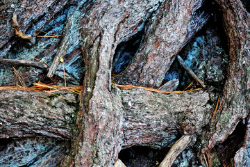 Gnarled roots of a tree