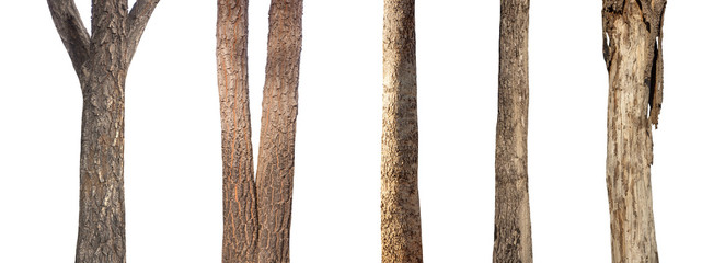 Poster Route dans la forêt isolated set tree trunk Collection on White background.